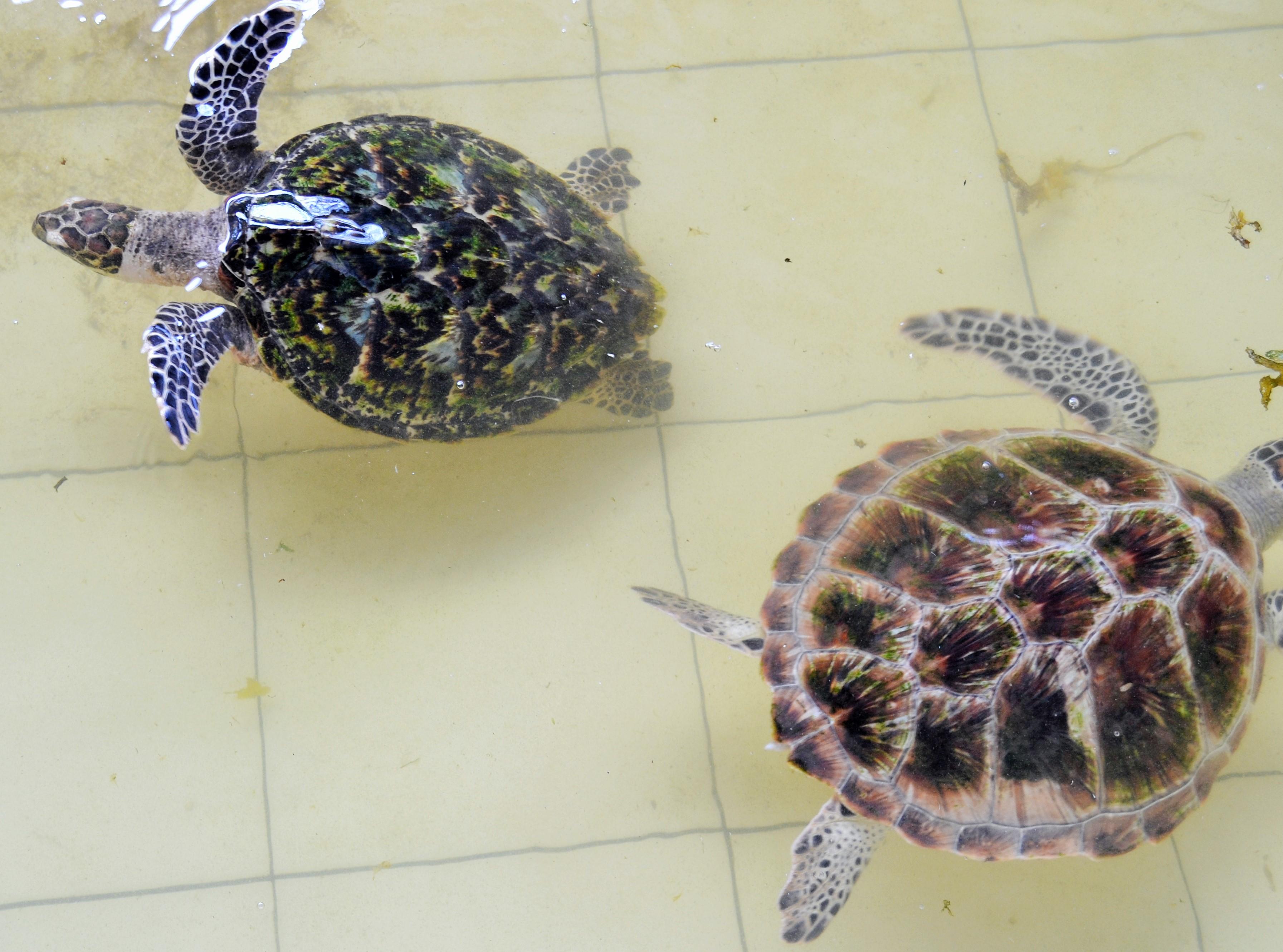 Keeping Box Turtles Inside Dsc